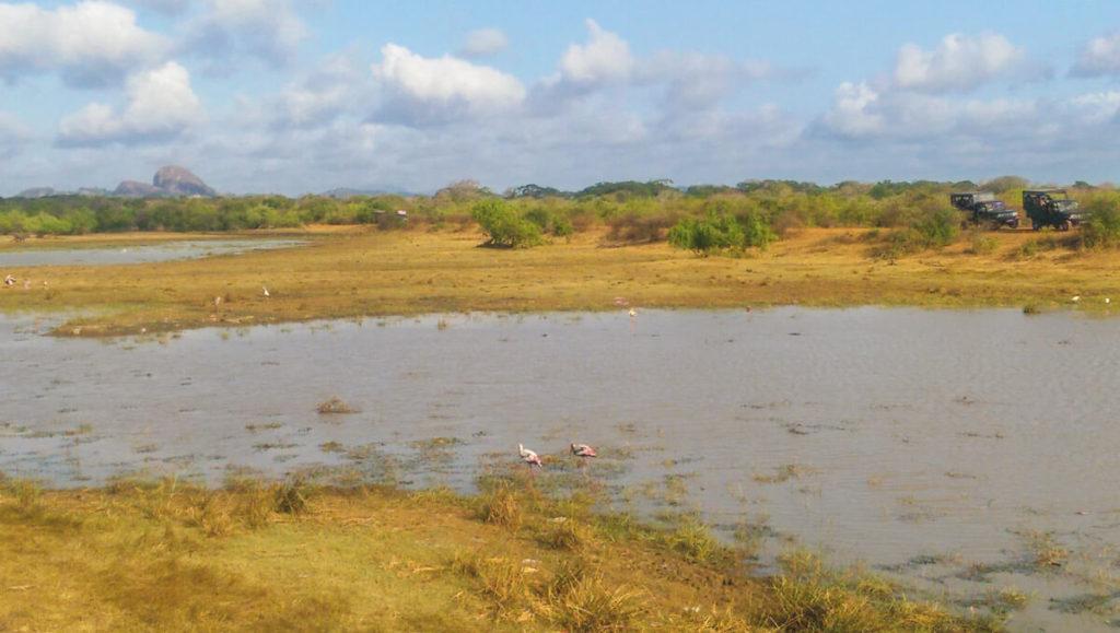Rundreise-Sri-Lanka-Yala-Nationalpark-Flamingos