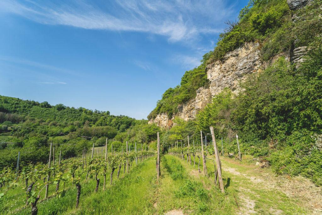 Mosel-Luxemburg-Wanderung-Naturpfad-Palmberg-Ahn-1