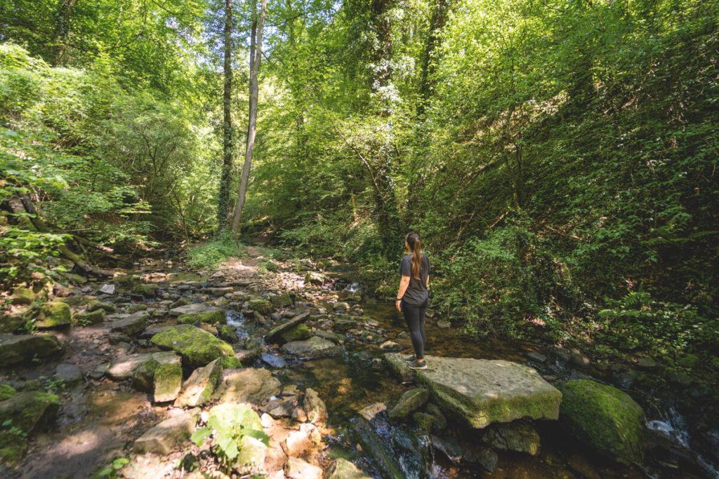 Wanderung Palmberg Ahn Traumschleife Donverbachtal Fluss