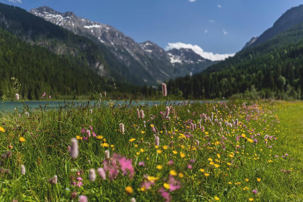 Jaegersee-Oesterreich-Kleinarl-Blumen