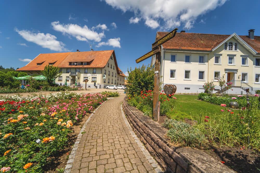 Rosendorf-Noeggenschwiel-Schwarzwald-2