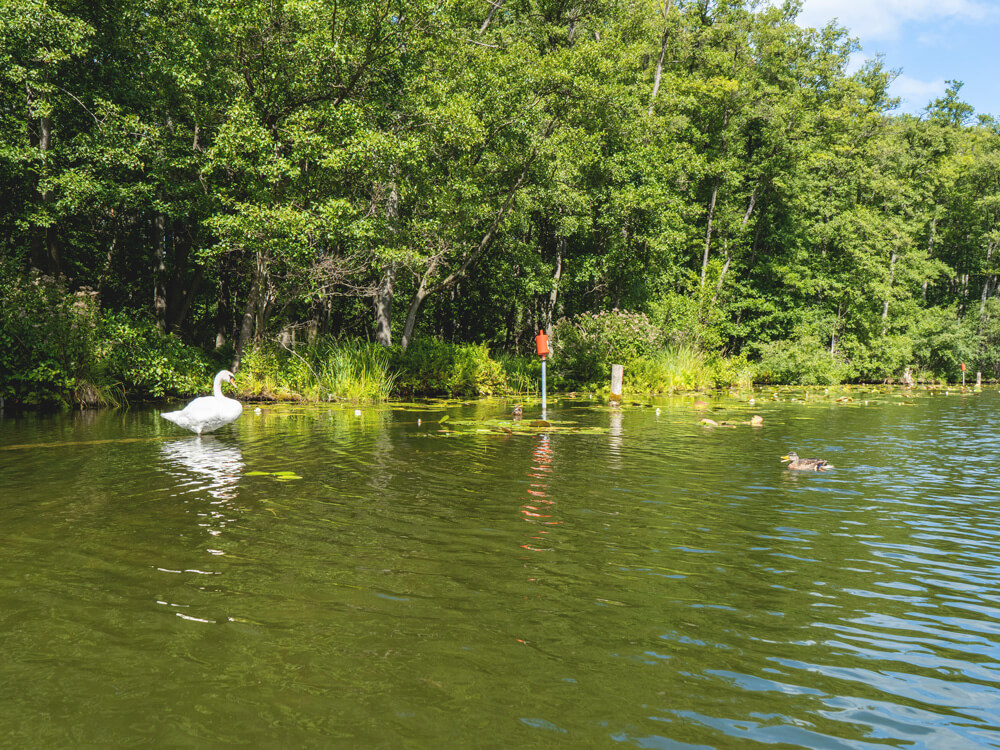 Kanutour-Wasserwanderung-Schwan-Enten