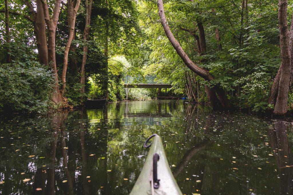Wasserwanderung-Brandenburg-Lychen-Treibholz